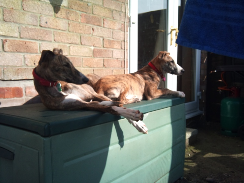 Ozzie (was Tristan) & Chilli (was Tilly)